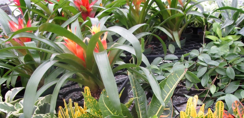 houseplants1