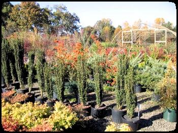 shrubs2_comv