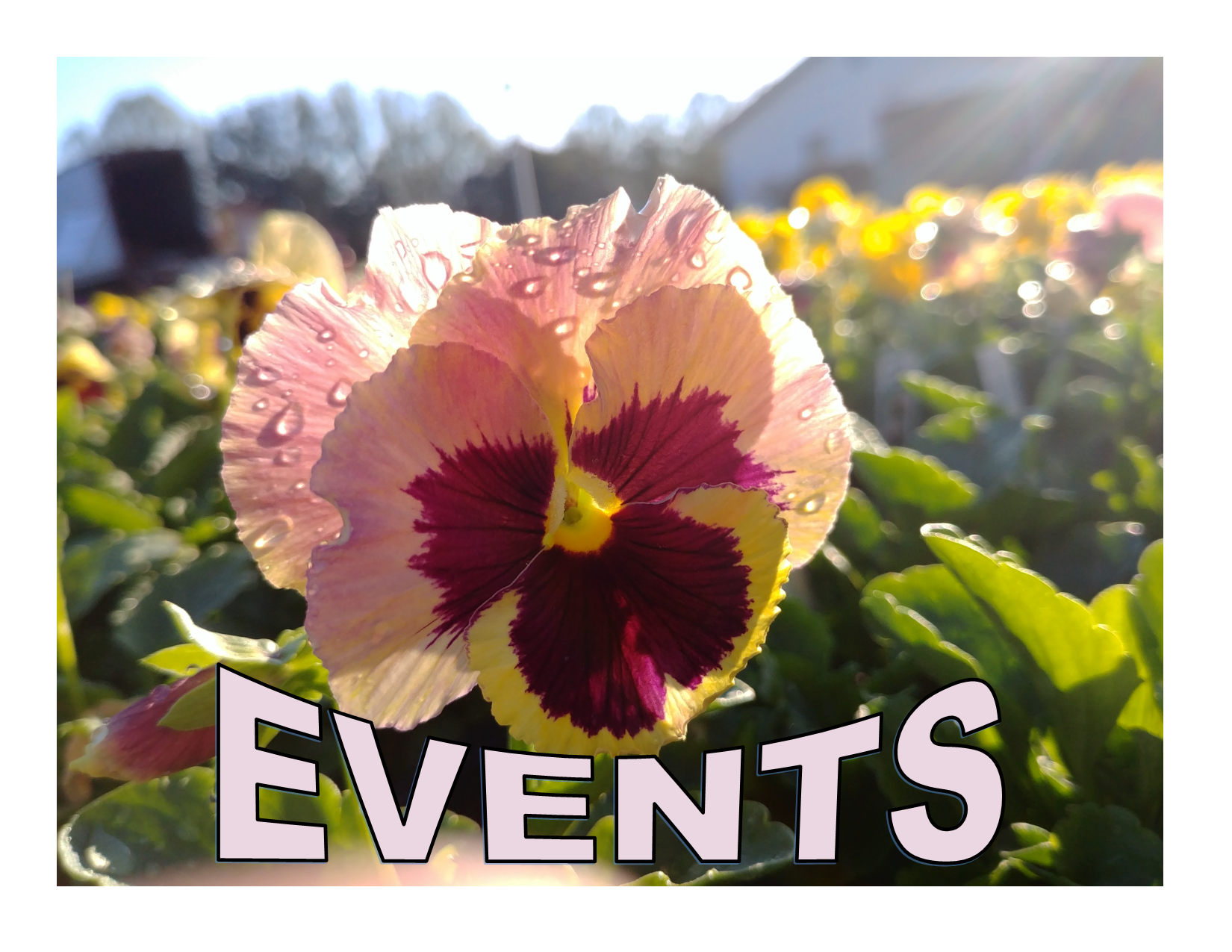 Mitchell's Special Events