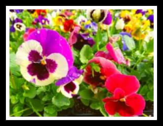 Cool Season Plant Care Tips