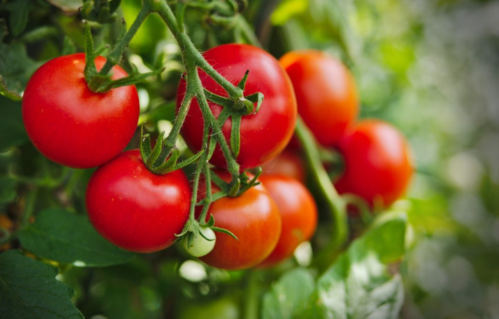Five Reasons Why Homegrown Produce Tastes Better