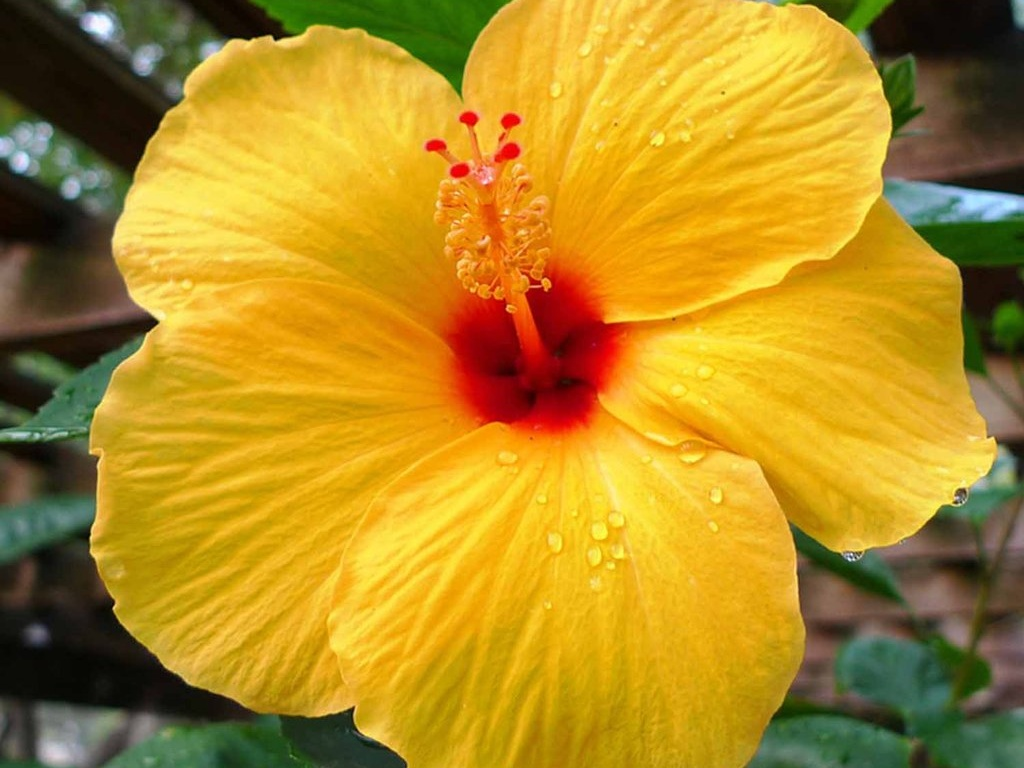 Soaked Soil? Five Plants That Thrive in Wet Locations