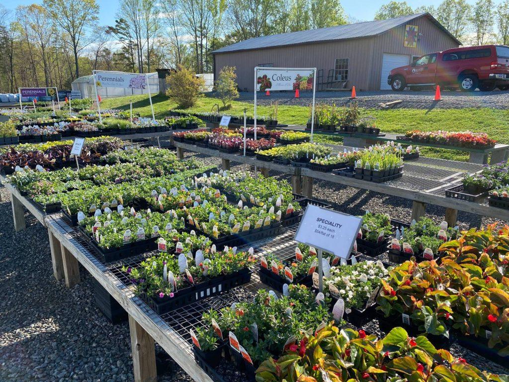 It's Spring! Let's Get Planting!