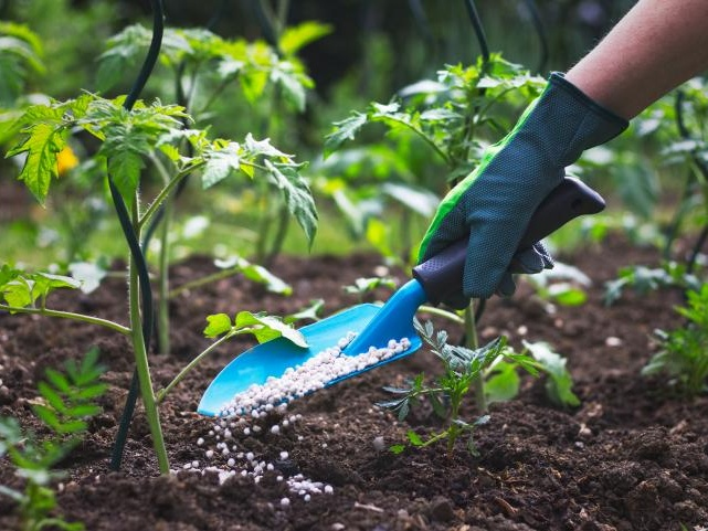 Want Healthy Plants? Do These 8 Things in June!