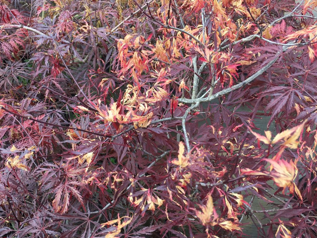 Winter Burn: What It Is and How It Affects Different Plants