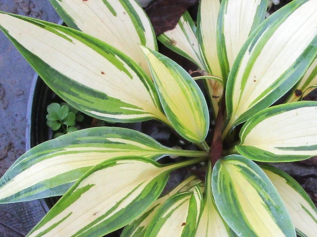 Perennials that Love Living in the Shadows